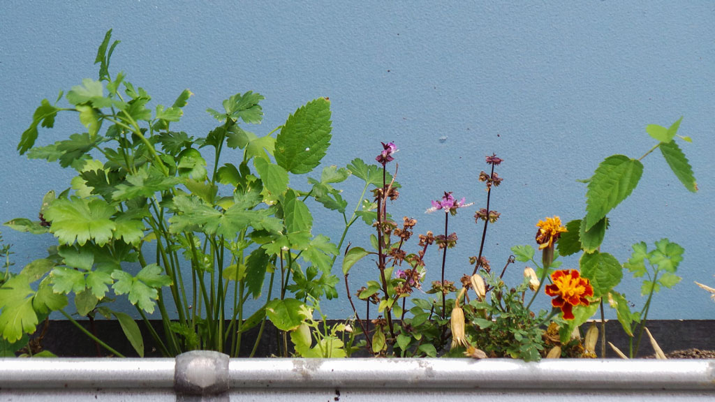 Reusing a gutter to hold plants