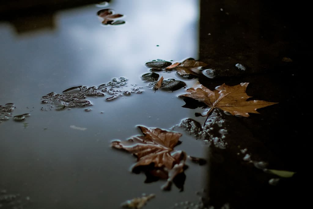 Leaves and rain – the deadly winter combination